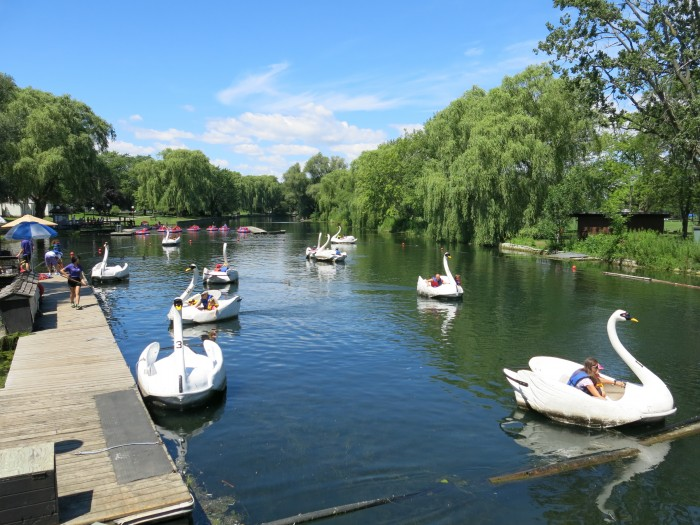 Swan pedal boats on Ward Island in Toronto
