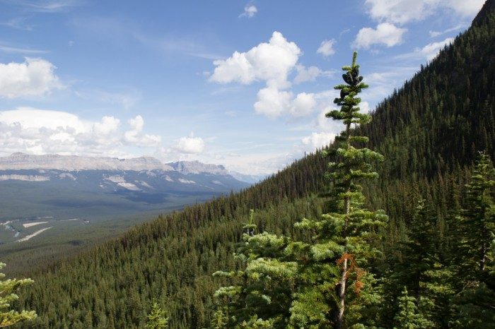 Canadian forest in the Rocky Mountains