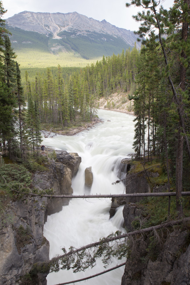 Sunwapta Falls white waters and rapids in the Rocky Mountains in Canada