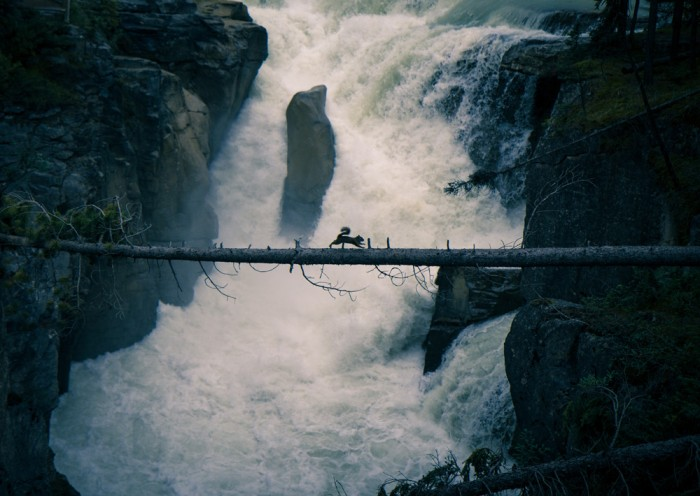 A squirrel crossing the white waters by walking on the log above the rapids in the Rocky Mountains, a perfect shot at the Sunwapta Falls by Antti Kareinen