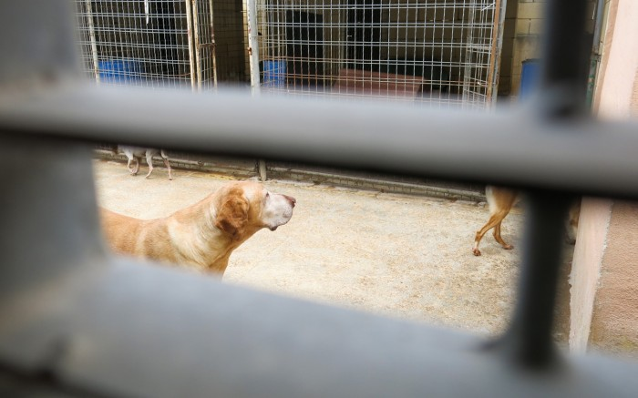 Most of the dogs are outside the building. They have their cages but they are also free during the day. They come along.