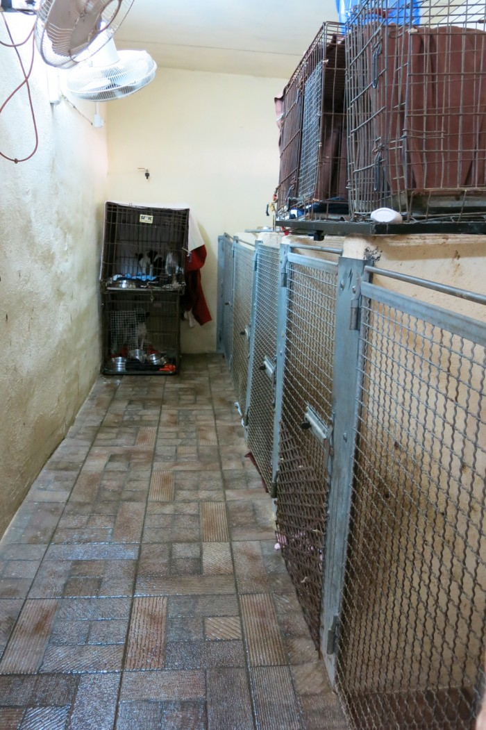 This is the room of dogs that have just arrived, the puppies and injured dogs. They are taken care of - medicated, vaccinated etc - here.